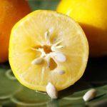 Лимон: польза и вред для здоровья организма