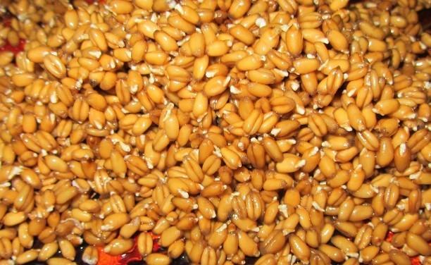 Пророщенная пшеница: польза и вред для организма