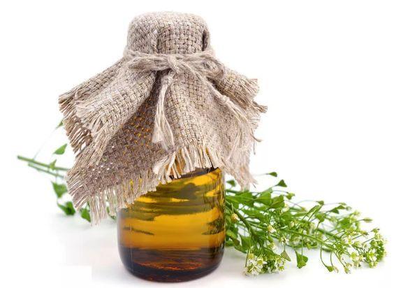 Пастушья сумка: лечебные свойства и противопоказания