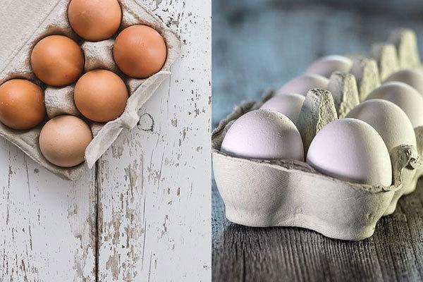 Чем отличаются белые яйца от коричневых