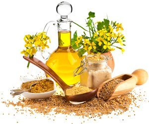 Горчичное масло: польза и вред для организма