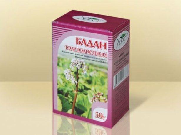 Бадан: лечебные свойства и противопоказания