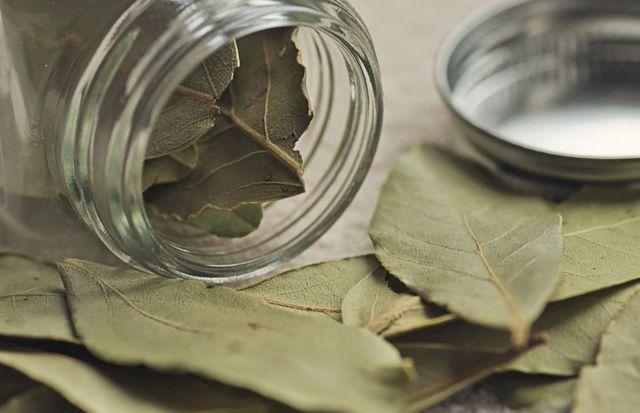 Отвар лаврового листа: польза и вред для организма