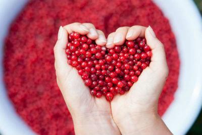 Красная смородина: польза и вред для здоровья