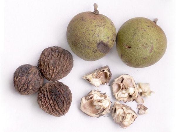 Черный орех: польза и вред для организма