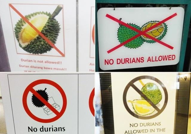 Дуриан: польза и вред для организма