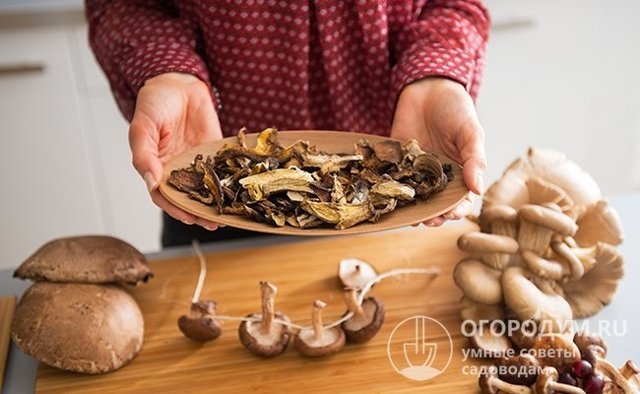 Как хранить сушеные грибы в домашних условиях