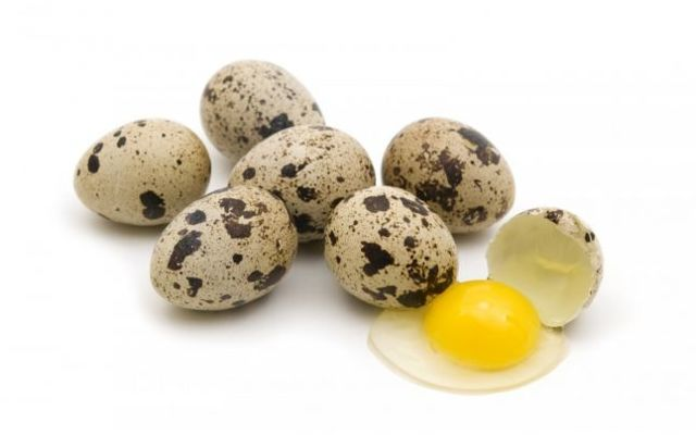 Перепелиные яйца: польза и вред для организма