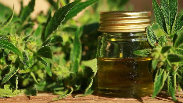 Конопляное масло: польза и вред для организма
