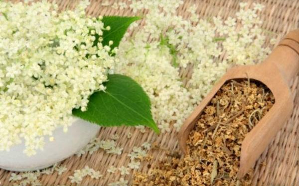 Лабазник: лечебные свойства и противопоказания