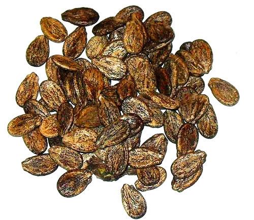 Арбузные семечки: польза и вред для здоровья