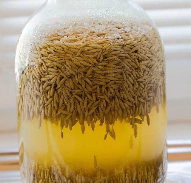 Квас из овса: польза и вред для здоровья
